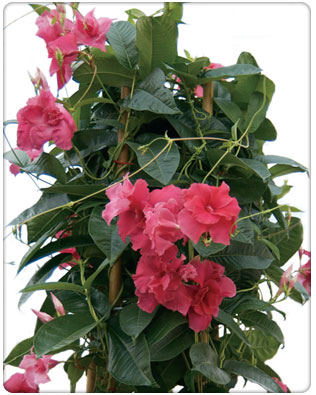 isaacson flowers  products, Natural flower